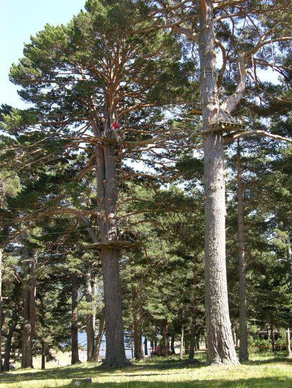 angles-aventure-parcours-arbre