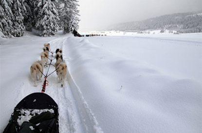 angles-aventure-autour-lac-chiens-traineaux